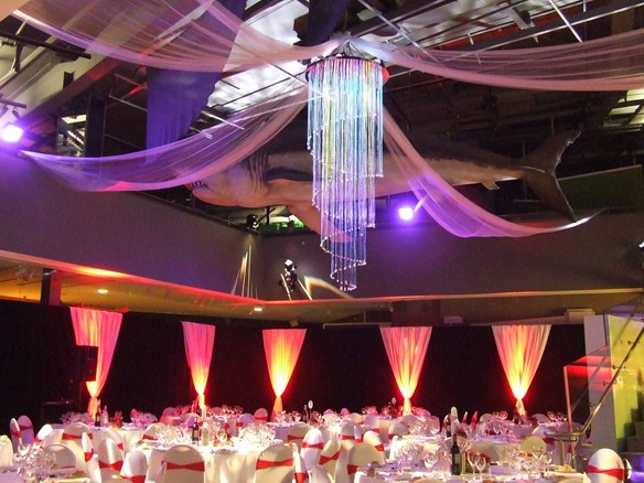 Fibre Optic Chandelier 005_venue hire.jpg