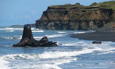Our Awesome Earth 80 000 year old tree stumps - Waverley Beach.jpg
